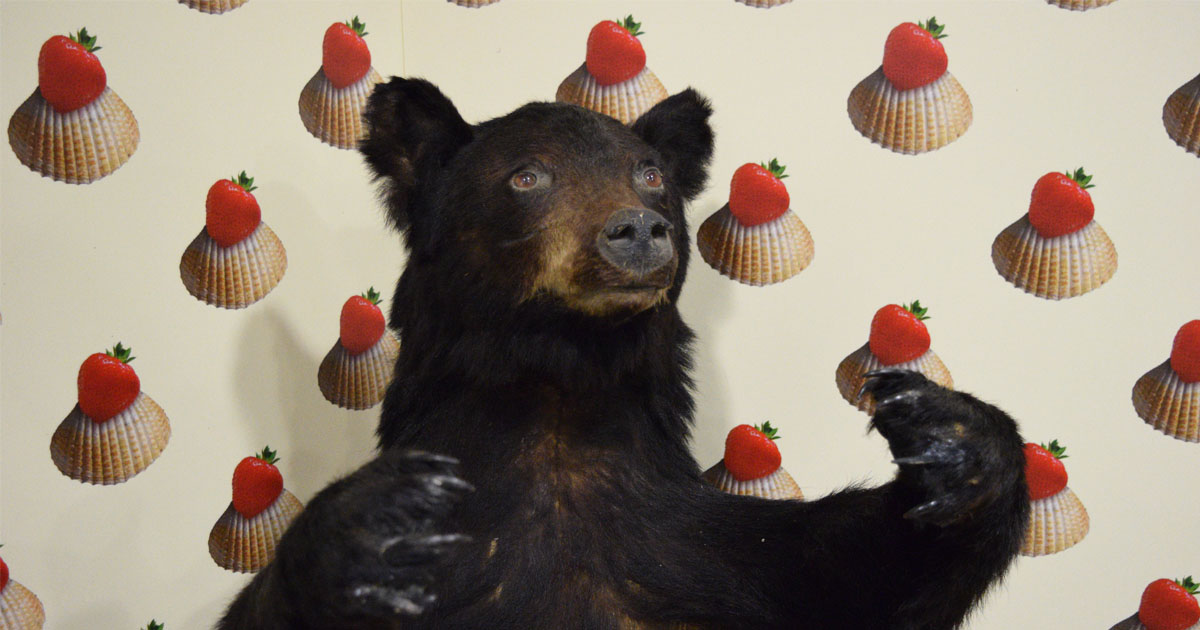 Image shows a taxidermy bear in front of seashell and strawberry wallpaper.